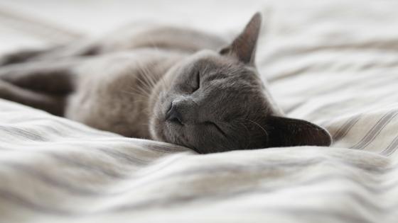 In den Wechseljahren ist erholsamer Schlaf besonders wichtig