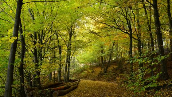 Waldbaden gegen Wechselbeschwerden und für ein starkes Immunsystem